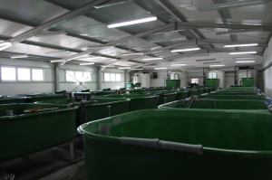 EU FUNDING TO SUPPORT SMES WORKING TO IMPROVE FISH FARM PRODUCTIVITY